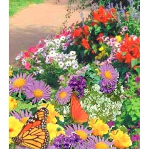 Monarch Butterfly Seed Mat