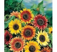 Giant Sunflower Seed Mat