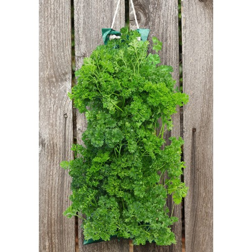Organic herb garden vertical porch patio basil for Gardening 4 less reviews