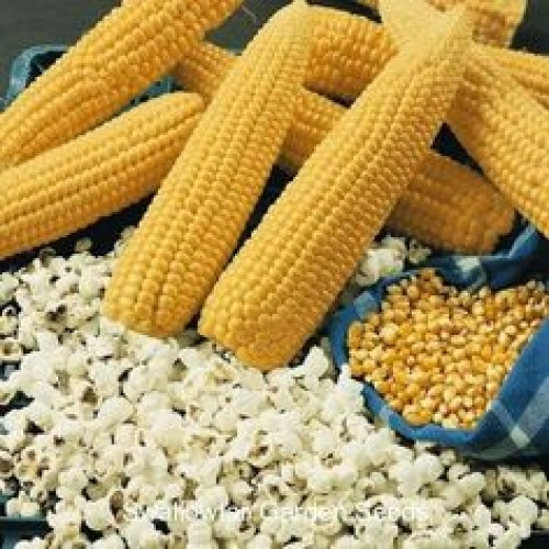 Popcorn Garden Roll and Grow Seeds