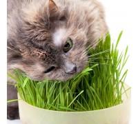 Cat Lovers Catnip - Cat Grass (2 Pack)