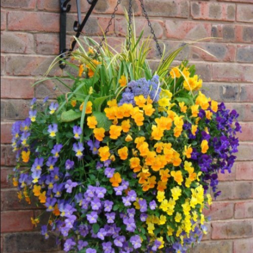 Butterfly Hanging Basket Kit
