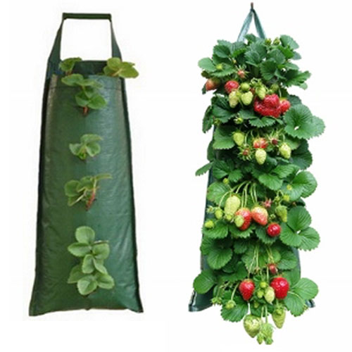 Hanging Strawberry Bag Plus 10 Strawberry Plants