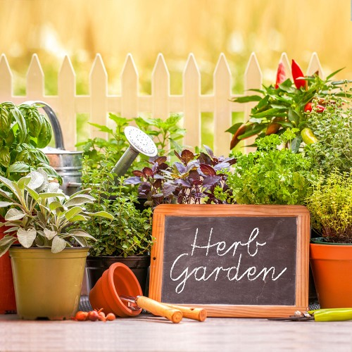 Healthy Herb Garden Starter Seed Kit