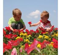 Kids Flower Garden Pre-Seeded Mat