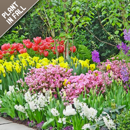 45 Days Of Spring Flower Bulbs Collection (45 Mixed Bulbs)