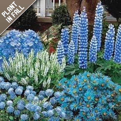 Blue Flower Bulb Garden Mixed Collection (40 Pack)