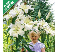"Giant 8"" Tree Flower Lily (3 Pack)"