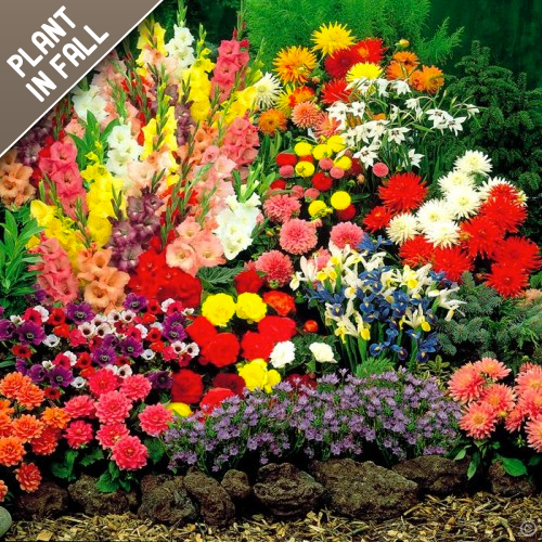 Rock Garden Flower Bulb Mixed Collection (55 Pack)