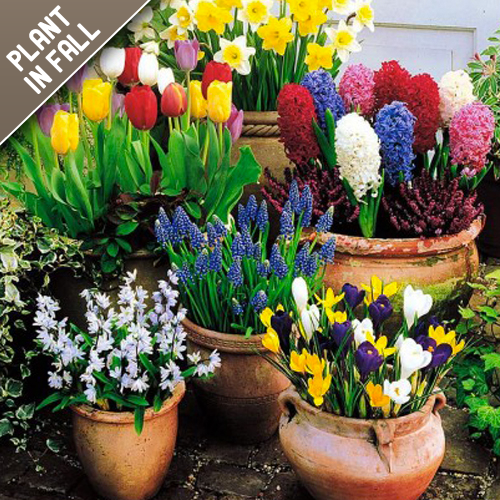 Spring Flower Bloom Mixed Bulb Garden Collection (25 Pack)